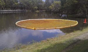Weeds in aquatic weed containment boom at our Robina, Gold Coast , Queensland project